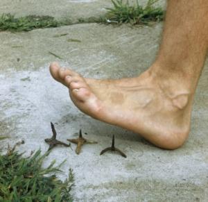 Barefoot (2)